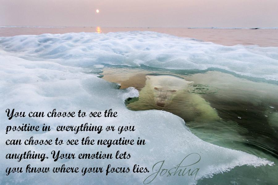Choose Positive Polar Bear